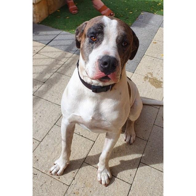 Photo of Medium To Large Dogs Needing Foster!
