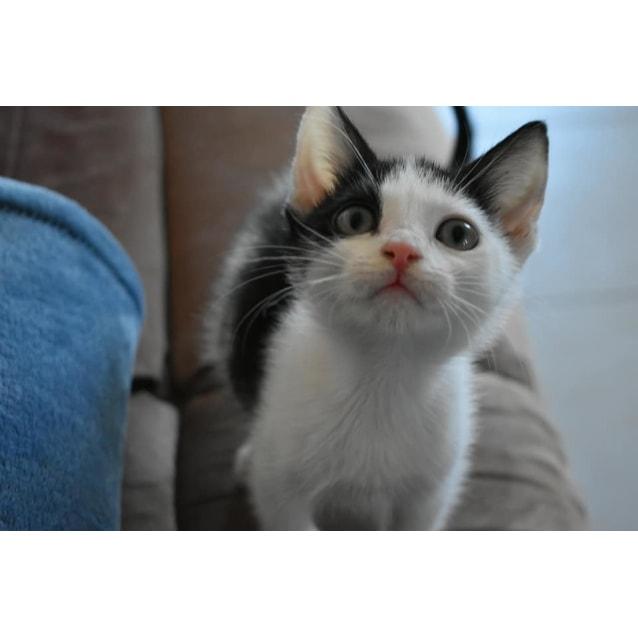 Photo of Greta