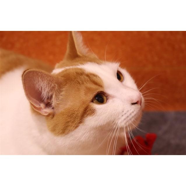 Photo of Kaikie