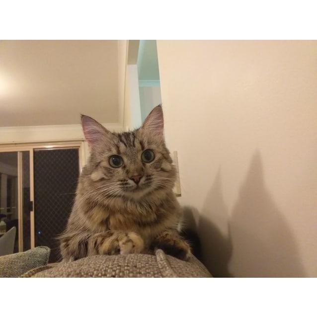 Photo of Mami