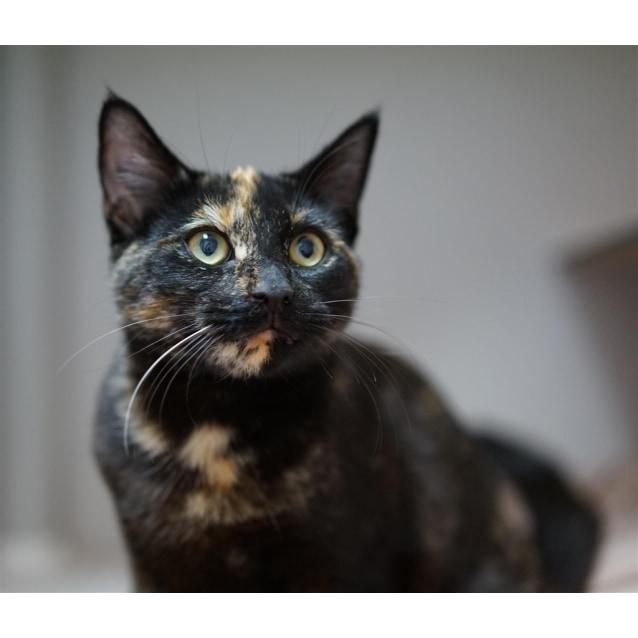 Photo of Sapphire