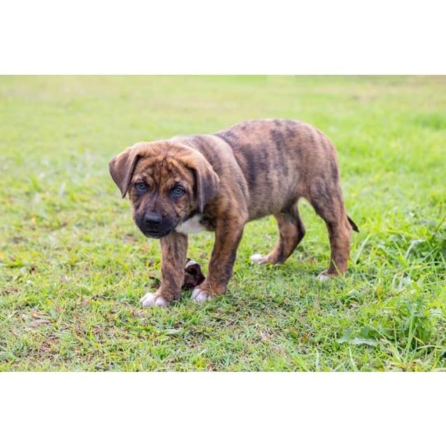 Photo of Roobie (Adoption Pending)