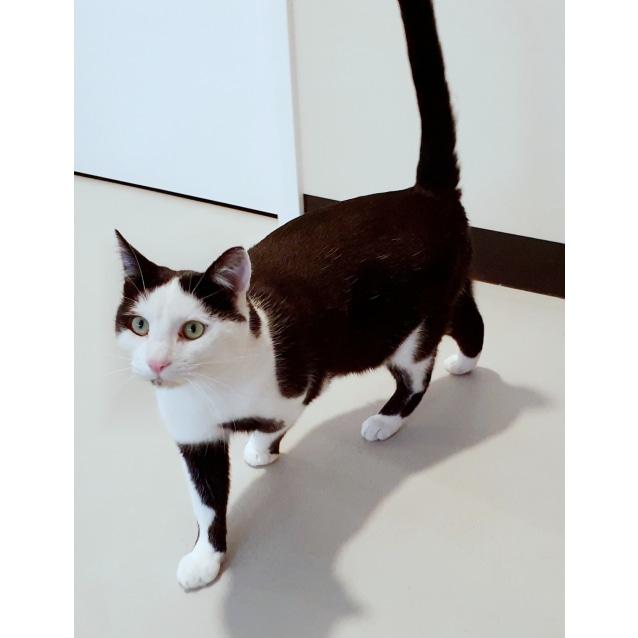 Photo of Pollo