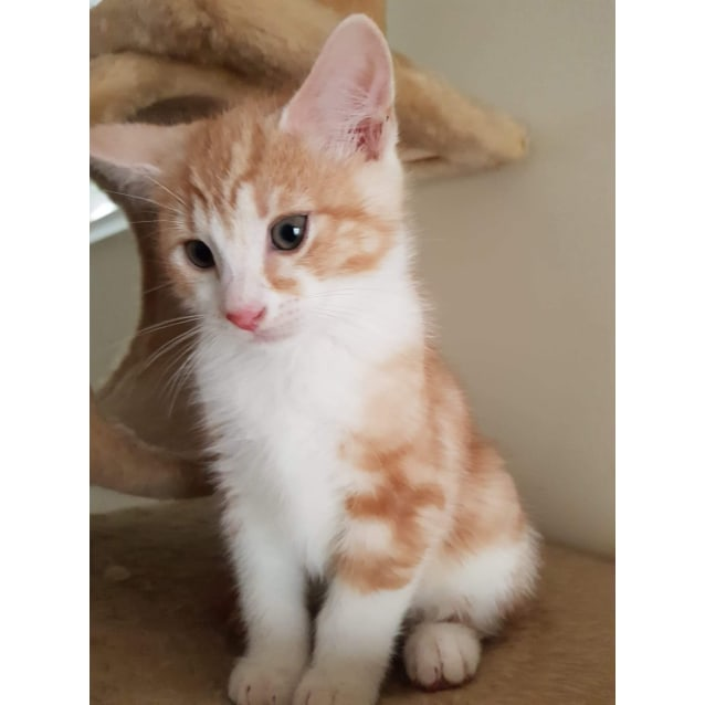 Photo of Lenny ❤