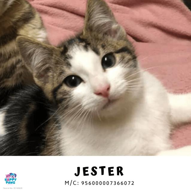 Photo of Jester