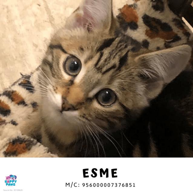 Photo of Esme