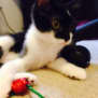 Photo of  Allister Is Looking For His Forever Home