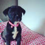 Photo of Indiana ** Such A Sweet Little Pup **