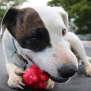 Photo of Snoopy (Adoption Pending)