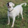 Photo of Snoopy (Adoption Pending)