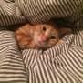 Photo of Fergus