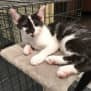 Photo of Martina *Sydney Animal Rescue Inc.*