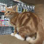 Photo of Shimbleshanks(Meet Me At Petstock Eltham)