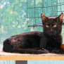 Photo of Duggie **2nd Chance Cat Rescue**