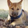 Photo of Zeta Dingo