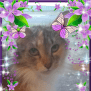 """Photo of """" Mercy""""  Foster Carer Needed"""