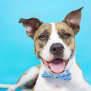 Photo of Copper **Adoption Pending**