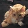 Photo of Milo Ec0388