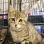 Photo of Petulia **2nd Chance Cat Rescue**