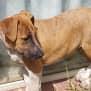 Photo of Heeler X Pups