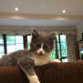 Photo of Gigi (Located In Doncaster East)