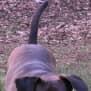 Photo of Muffy