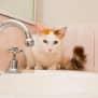 Photo of Kitty Sc0490
