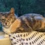 Photo of Queenie