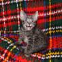 Photo of Jack   Nc634 *Adoption Pending