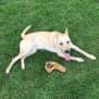 Photo of Cobba  Dingo X