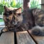 Photo of Ella **2nd Chance Cat Rescue**