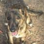 Photo of Sassy