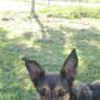 Photo of Callie