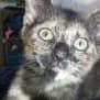 Photo of Lottie