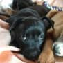 Photo of Cora *Adoption Pending*