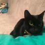 Photo of Tabatha The Beautiful Black Cat