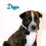 Photo of Digger