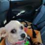 Photo of Stella