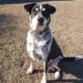 Photo of Koda