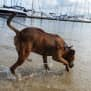 Photo of Mutley *Special Needs*