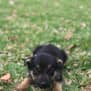 Photo of Chai ~ Adoption Pending ~