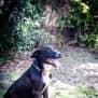 Photo of Rufus