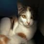 Photo of Elvis (Located In Endeavour Hills)