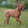Photo of Skipper (Adoption Pending)