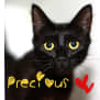 Photo of Precious   Meet Me At Neko Hq/Cat Lounge Preston