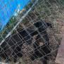 Photo of Barney ~ Adoption Special $250 ~