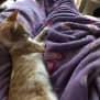Photo of Tabitha Ginger And White Kitten