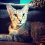 Photo of Licorice