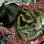 Photo of Zohey (& Mango)