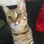 Photo of Melba  Meet Me At Cat Lounge/Neko Hq Preston
